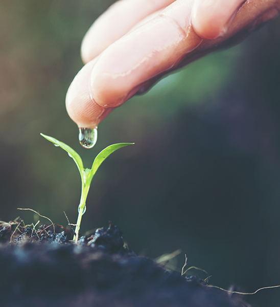 cultivos inteligentes